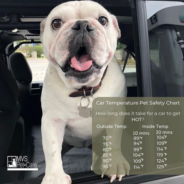 Never Leave Your Pet in a Parked Vehicle