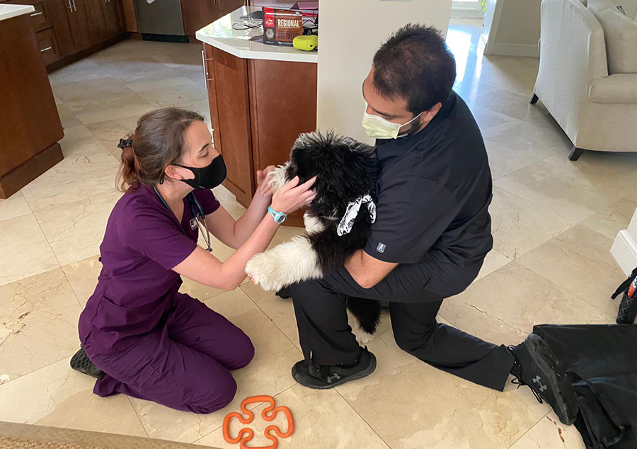 get home veterinary care in miami today